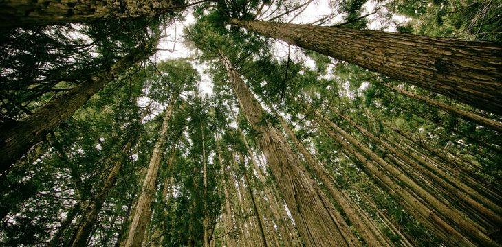 Regalos ecológicos personalizados: Marketing actual