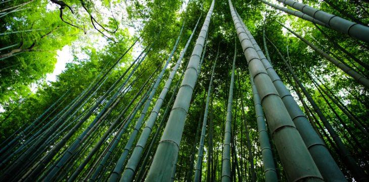 La técnica láser sobre la madera de bambú