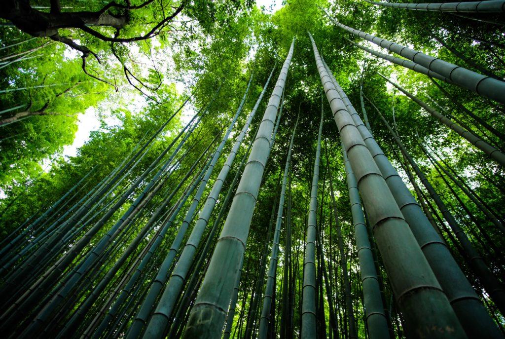 Personalización de la madera de bambú con laser