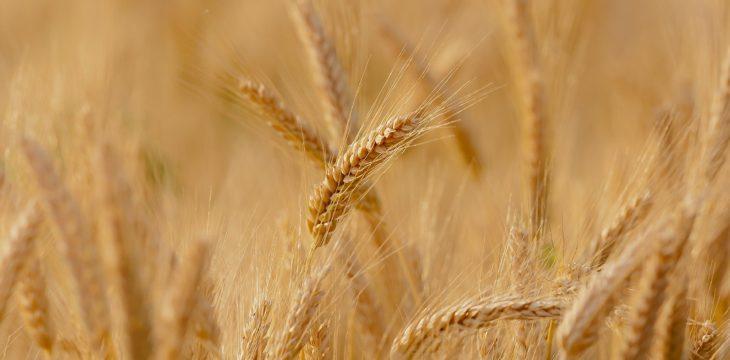 La paja de trigo en los regalos publicitarios