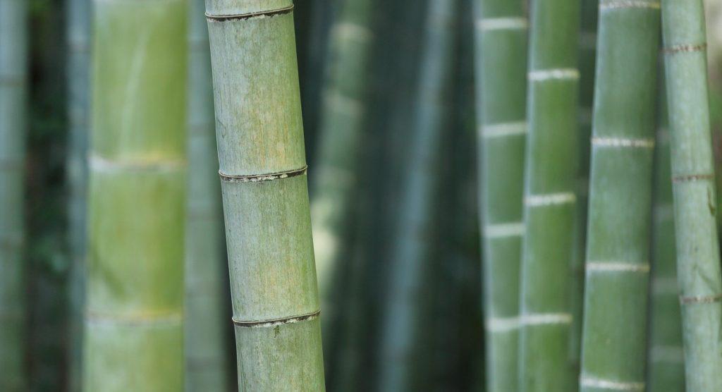 El bambú como opción más ecológica