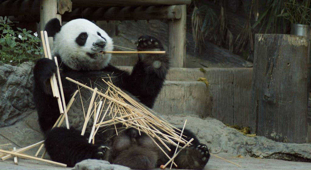 conclusiones del láser sobre el bambú